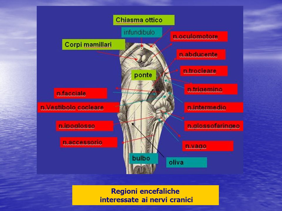 Regioni encefaliche interessate ai nervi cranici