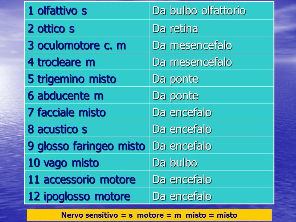 Nervo sensitivo = s motore = m misto = misto