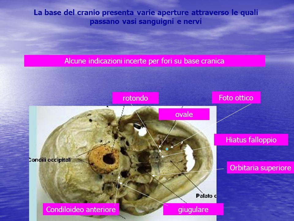 Alcune indicazioni incerte per fori su base cranica