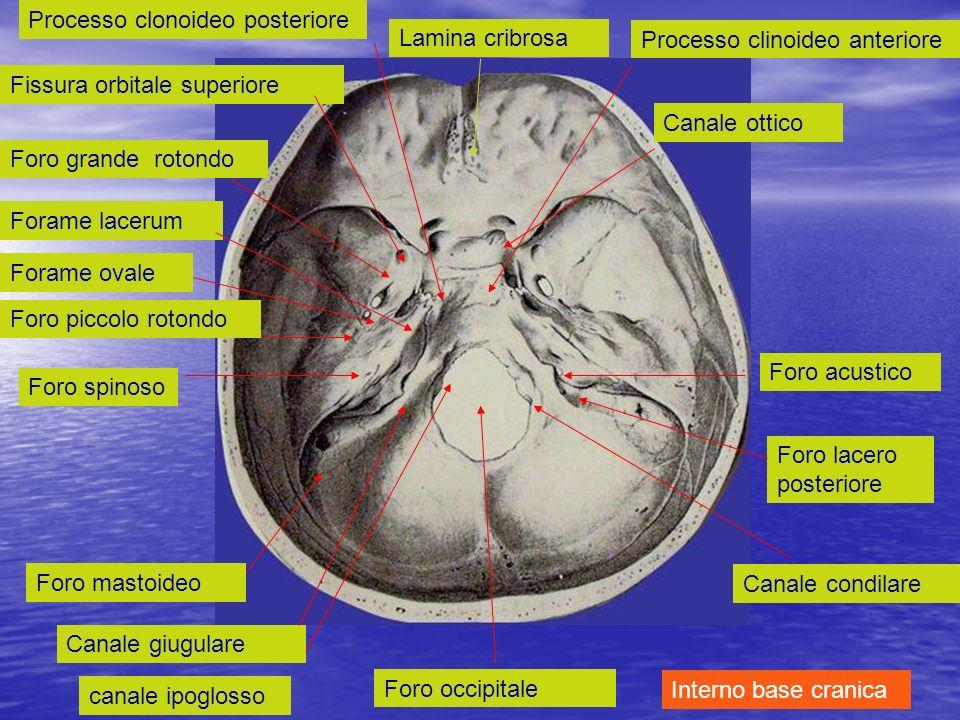 Processo clonoideo posteriore