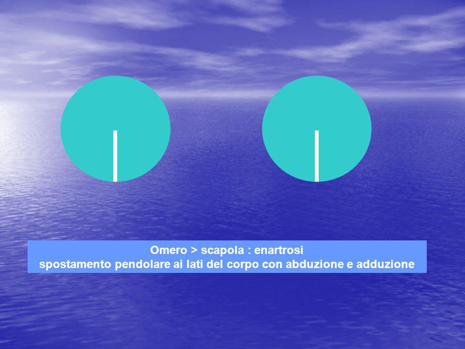 Omero > scapola : enartrosi spostamento pendolare ai lati del corpo con abduzione e adduzione