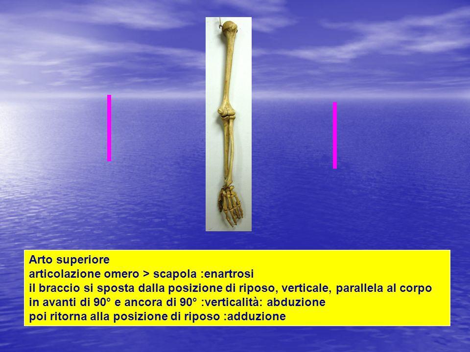 Arto superiore articolazione omero > scapola :enartrosi il braccio si sposta dalla posizione di riposo, verticale, parallela al corpo in avanti di 90° e ancora di 90° :verticalità: abduzione poi ritorna alla posizione di riposo :adduzione