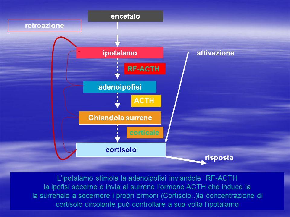 encefalo retroazione. ipotalamo. attivazione. RF-ACTH. adenoipofisi. ACTH. Ghiandola surrene.
