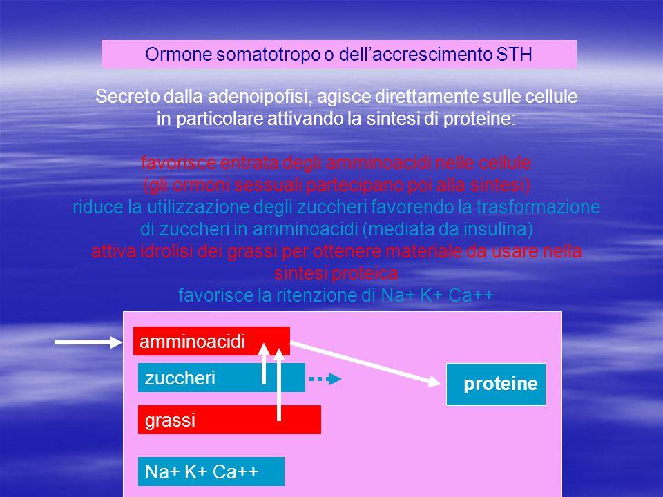 Ormone somatotropo o dell'accrescimento STH