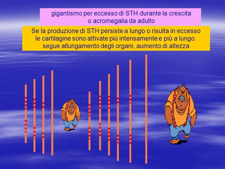 gigantismo per eccesso di STH durante la crescita o acromegalia da adulto