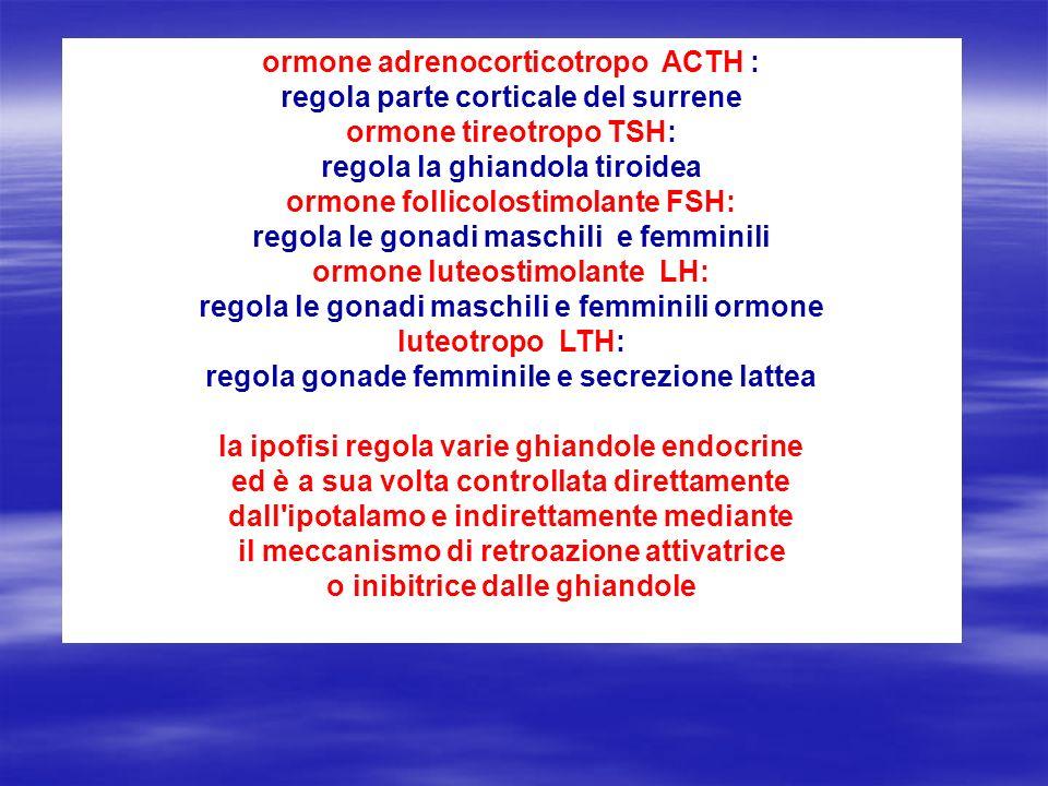 luteotropo LTH: regola gonade femminile e secrezione lattea