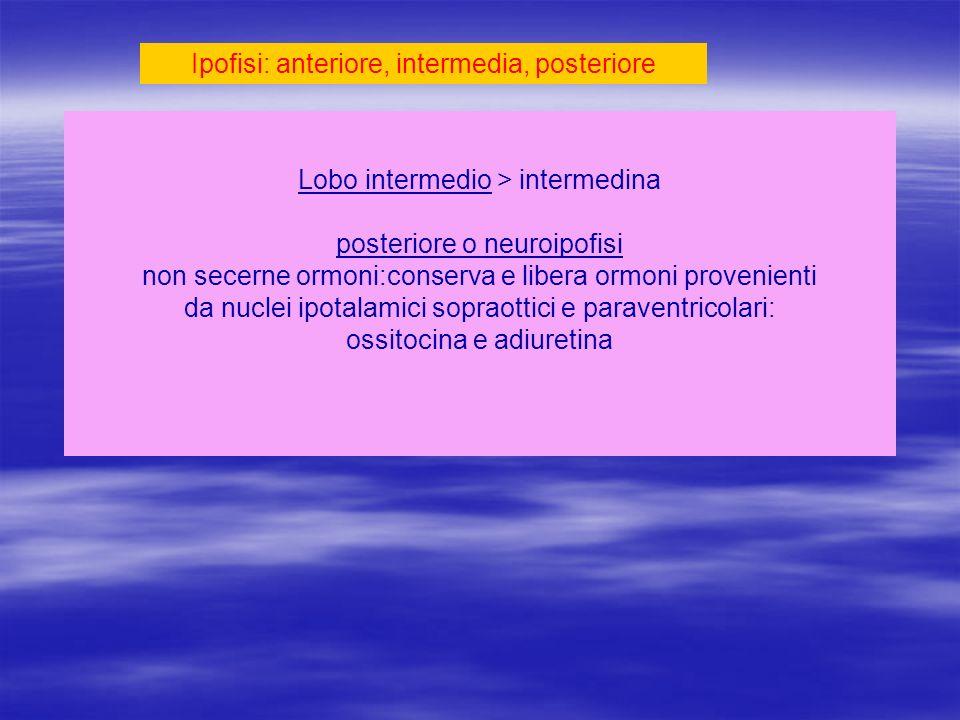 Ipofisi: anteriore, intermedia, posteriore