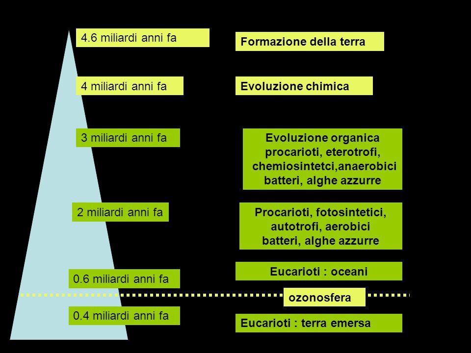 Procarioti, fotosintetici, autotrofi, aerobici batteri, alghe azzurre