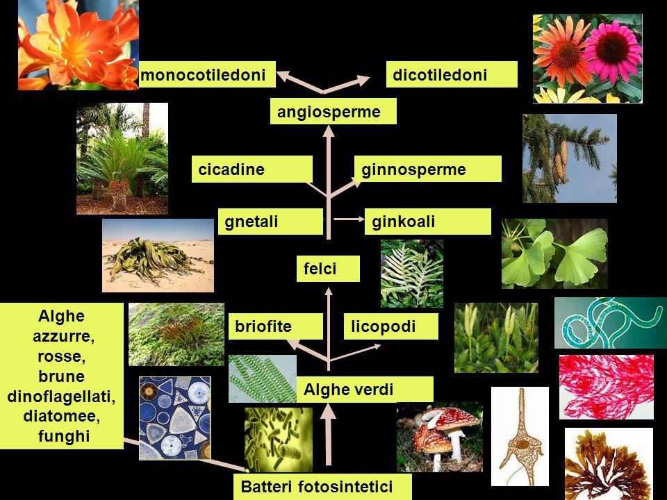 Alghe azzurre, rosse, brune dinoflagellati, diatomee, funghi
