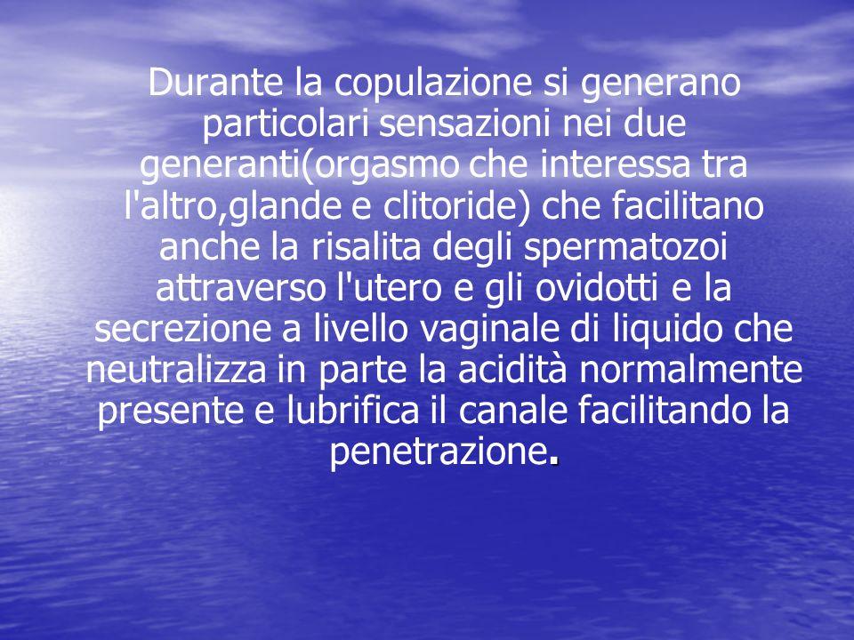 Durante la copulazione si generano particolari sensazioni nei due generanti(orgasmo che interessa tra l altro,glande e clitoride) che facilitano anche la risalita degli spermatozoi attraverso l utero e gli ovidotti e la secrezione a livello vaginale di liquido che neutralizza in parte la acidità normalmente presente e lubrifica il canale facilitando la penetrazione.
