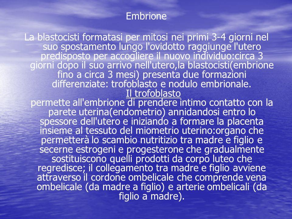 Embrione