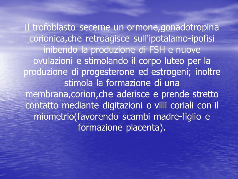 Il trofoblasto secerne un ormone,gonadotropina corionica,che retroagisce sull ipotalamo-ipofisi inibendo la produzione di FSH e nuove ovulazioni e stimolando il corpo luteo per la produzione di progesterone ed estrogeni; inoltre stimola la formazione di una membrana,corion,che aderisce e prende stretto contatto mediante digitazioni o villi coriali con il miometrio(favorendo scambi madre-figlio e formazione placenta).
