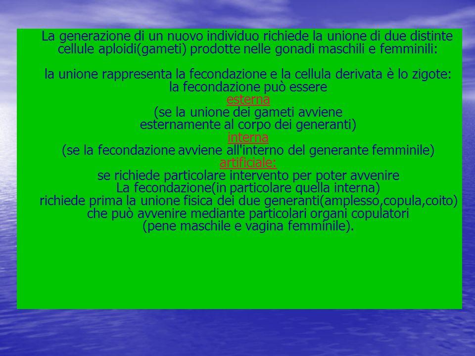 La generazione di un nuovo individuo richiede la unione di due distinte cellule aploidi(gameti) prodotte nelle gonadi maschili e femminili: la unione rappresenta la fecondazione e la cellula derivata è lo zigote: la fecondazione può essere esterna (se la unione dei gameti avviene esternamente al corpo dei generanti) interna (se la fecondazione avviene all interno del generante femminile) artificiale: se richiede particolare intervento per poter avvenire La fecondazione(in particolare quella interna) richiede prima la unione fisica dei due generanti(amplesso,copula,coito) che può avvenire mediante particolari organi copulatori (pene maschile e vagina femminile).