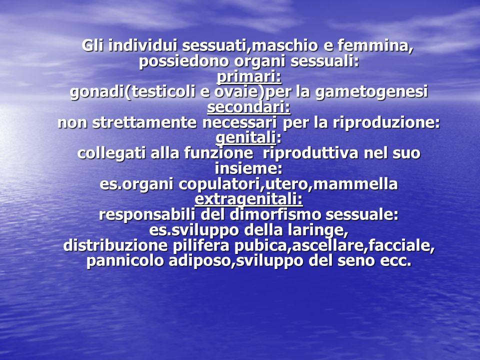 Gli individui sessuati,maschio e femmina, possiedono organi sessuali: primari: gonadi(testicoli e ovaie)per la gametogenesi secondari: non strettamente necessari per la riproduzione: genitali: collegati alla funzione riproduttiva nel suo insieme: es.organi copulatori,utero,mammella extragenitali: responsabili del dimorfismo sessuale: es.sviluppo della laringe, distribuzione pilifera pubica,ascellare,facciale, pannicolo adiposo,sviluppo del seno ecc.