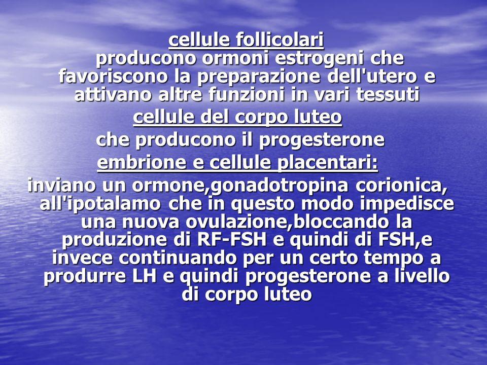 cellule del corpo luteo che producono il progesterone