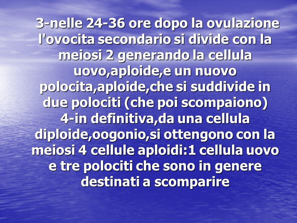 3-nelle 24-36 ore dopo la ovulazione l ovocita secondario si divide con la meiosi 2 generando la cellula uovo,aploide,e un nuovo polocita,aploide,che si suddivide in due polociti (che poi scompaiono) 4-in definitiva,da una cellula diploide,oogonio,si ottengono con la meiosi 4 cellule aploidi:1 cellula uovo e tre polociti che sono in genere destinati a scomparire