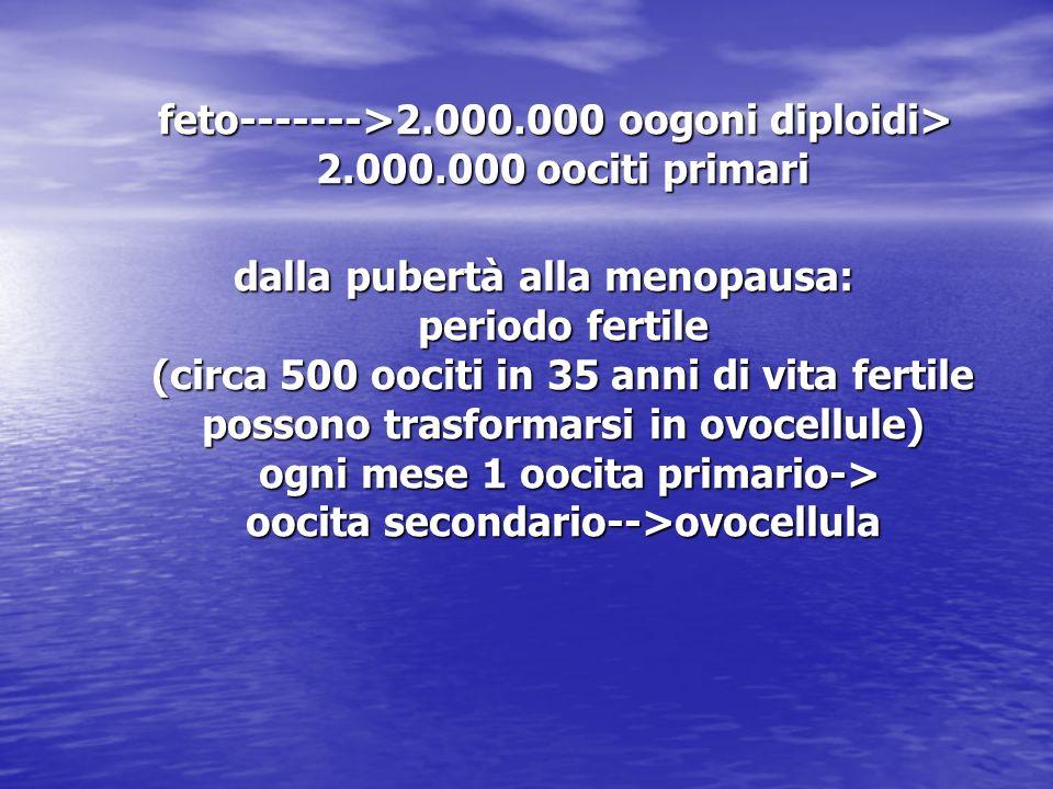feto------->2.000.000 oogoni diploidi> 2.000.000 oociti primari