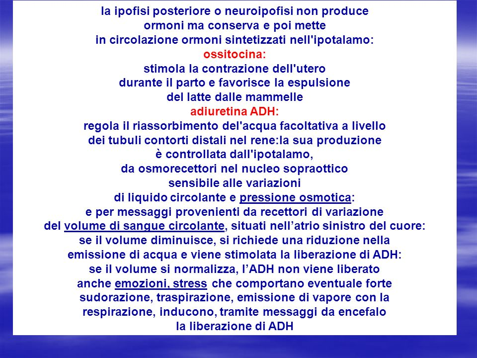 la ipofisi posteriore o neuroipofisi non produce