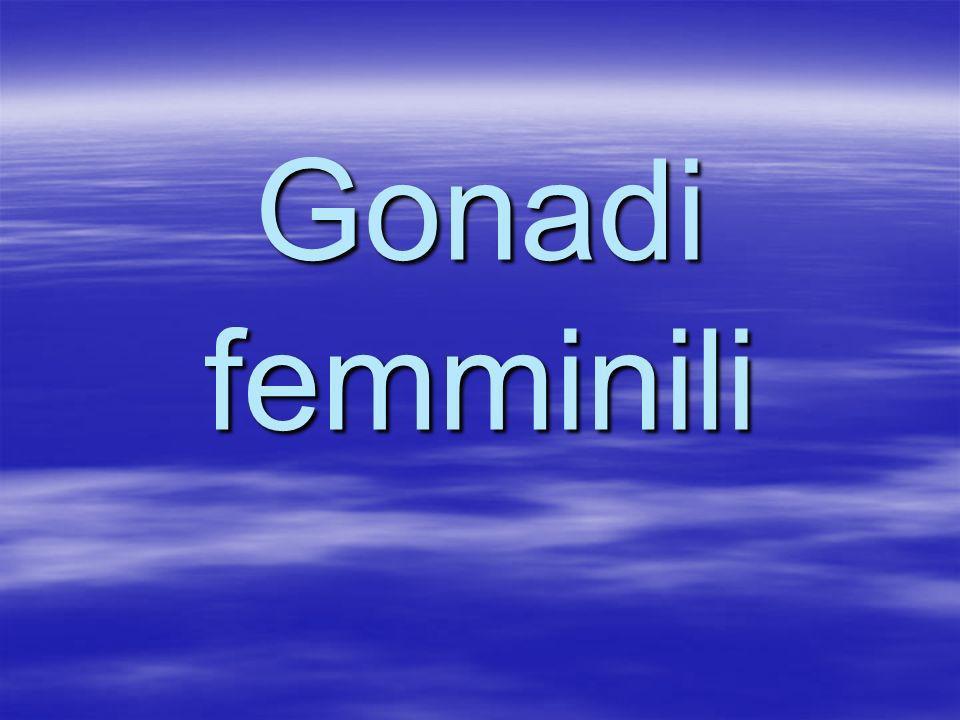 Gonadi femminili
