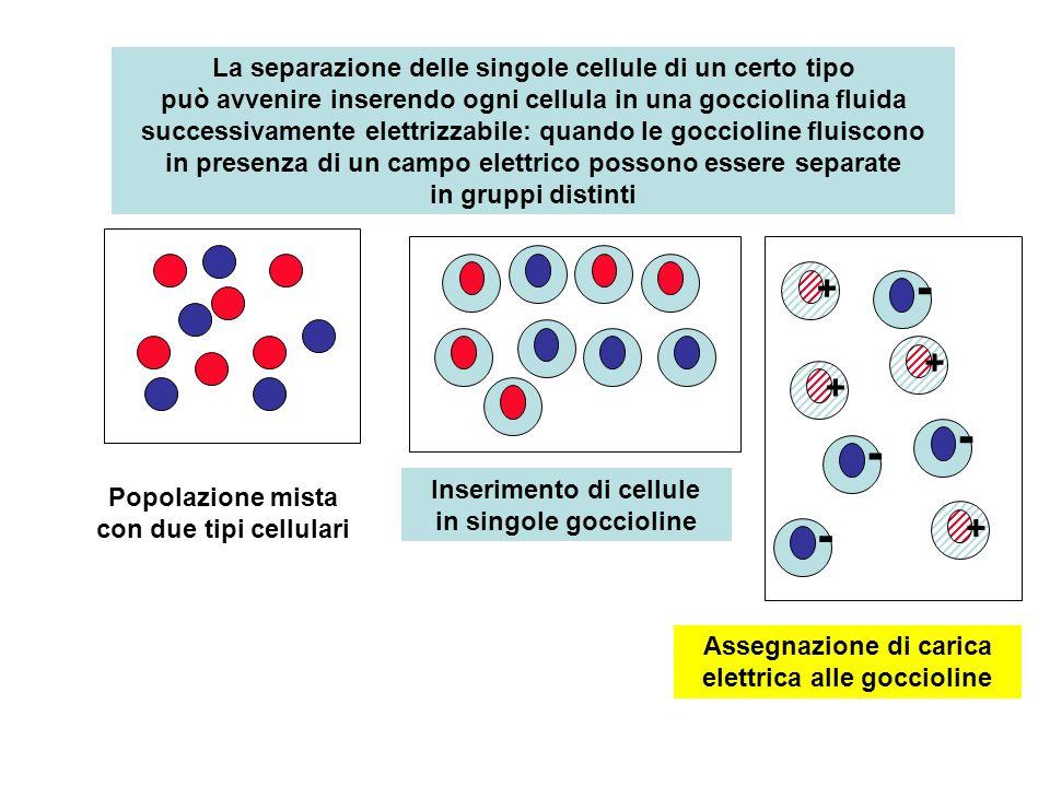 La separazione delle singole cellule di un certo tipo può avvenire inserendo ogni cellula in una gocciolina fluida successivamente elettrizzabile: quando le goccioline fluiscono in presenza di un campo elettrico possono essere separate in gruppi distinti