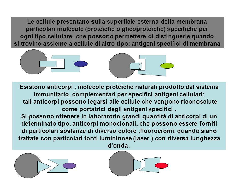 Le cellule presentano sulla superficie esterna della membrana particolari molecole (proteiche o glicoproteiche) specifiche per ogni tipo cellulare, che possono permettere di distinguerle quando si trovino assieme a cellule di altro tipo: antigeni specifici di membrana