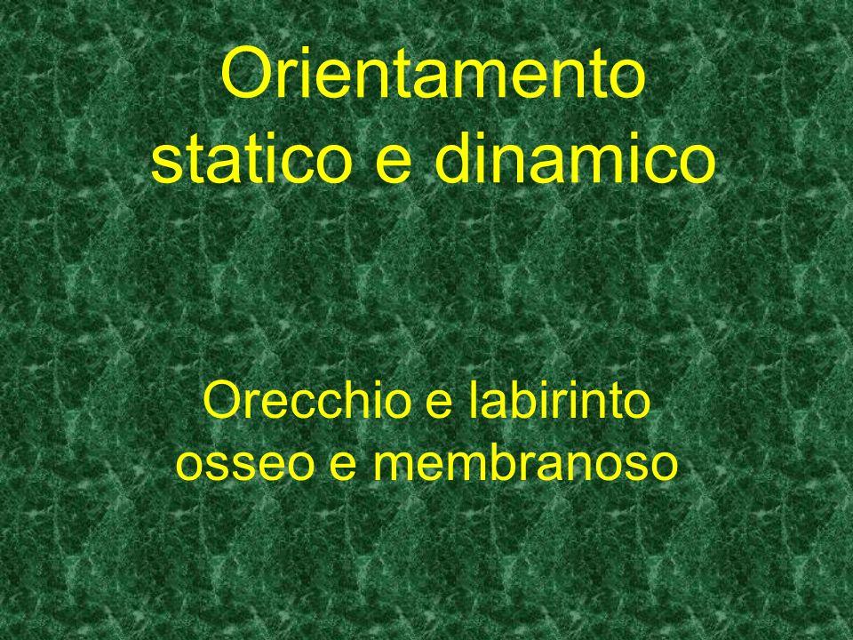 Orientamento statico e dinamico