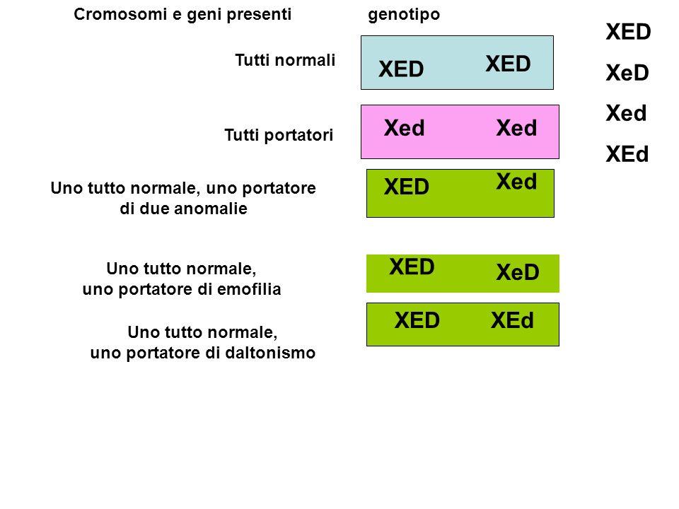 XED XeD Xed XEd XED XED Xed Xed Xed XED XED XeD XED XEd
