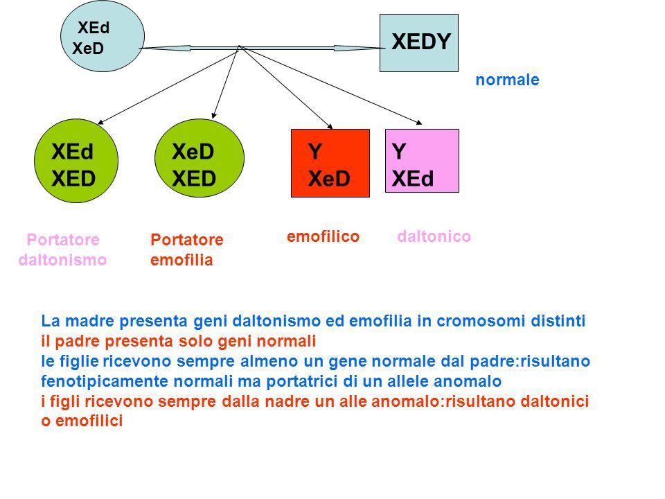 XEDY XEd XED XeD XED Y XeD Y XEd XEd XeD normale Portatore daltonismo