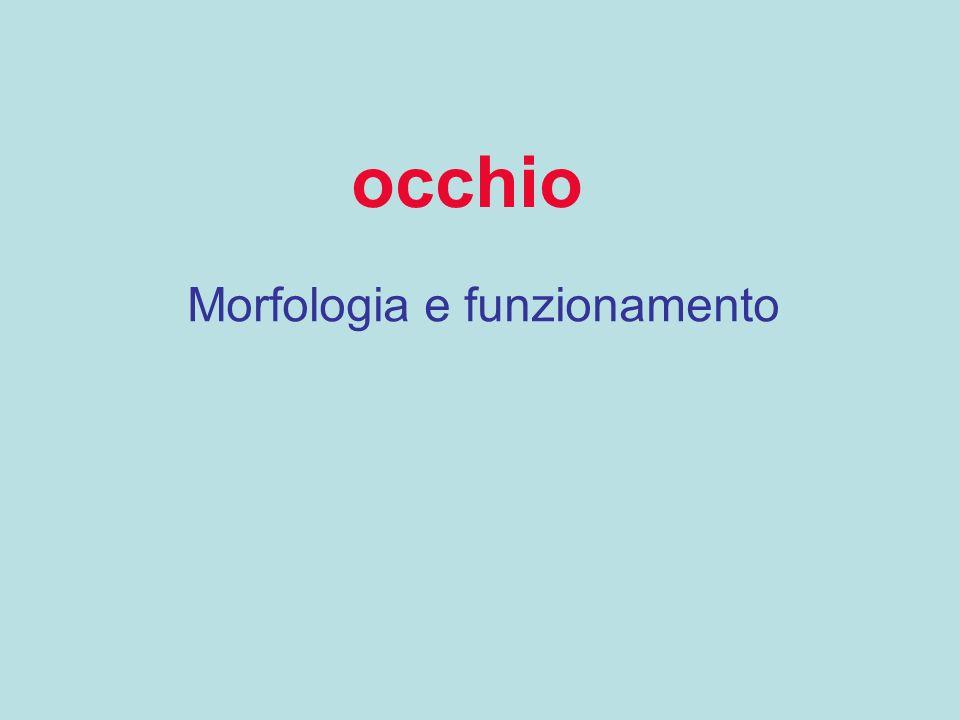 Morfologia e funzionamento