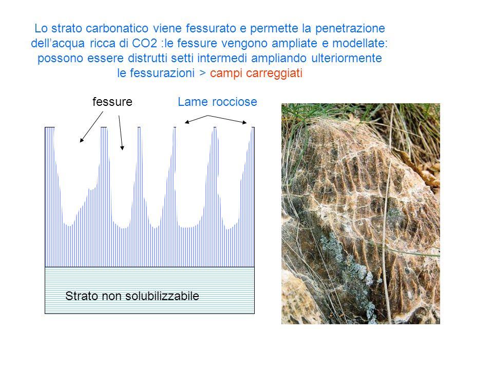 Lo strato carbonatico viene fessurato e permette la penetrazione dell'acqua ricca di CO2 :le fessure vengono ampliate e modellate: possono essere distrutti setti intermedi ampliando ulteriormente le fessurazioni > campi carreggiati