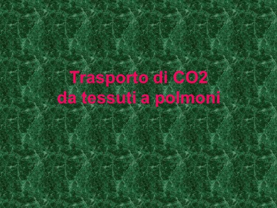 Trasporto di CO2 da tessuti a polmoni