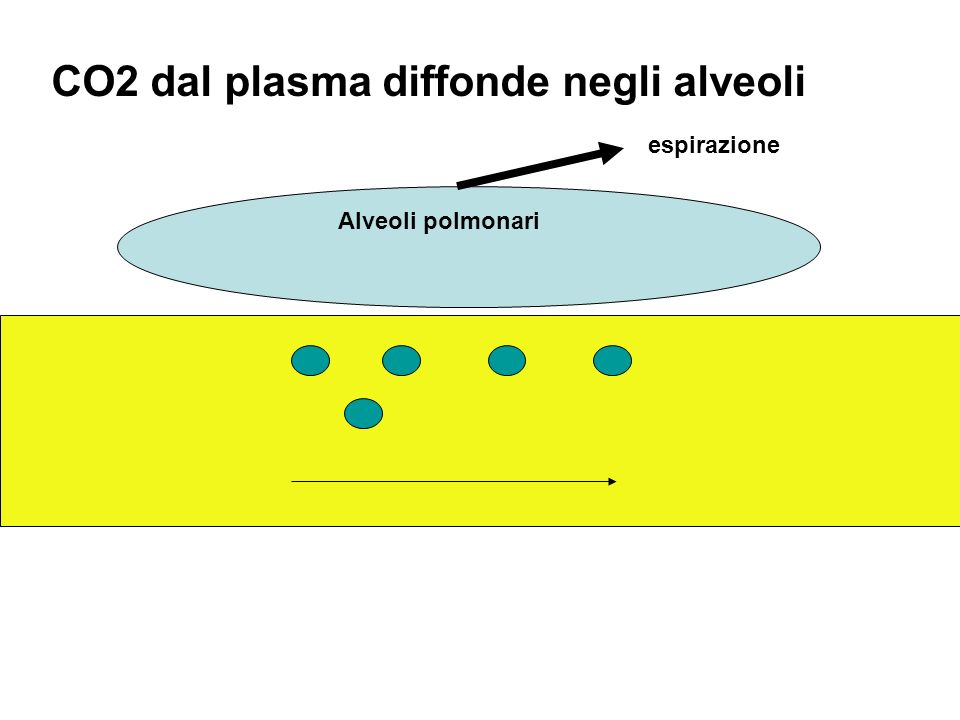 CO2 dal plasma diffonde negli alveoli
