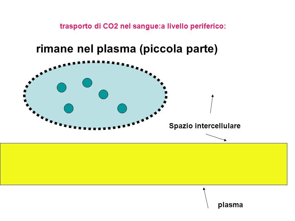 rimane nel plasma (piccola parte)