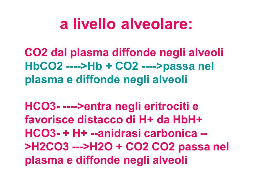 a livello alveolare: