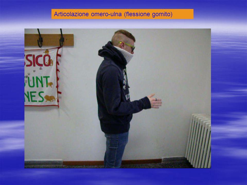 Articolazione omero-ulna (flessione gomito)