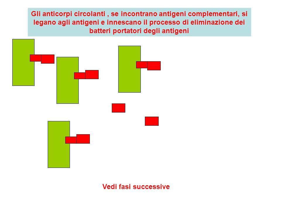 Gli anticorpi circolanti , se incontrano antigeni complementari, si legano agli antigeni e innescano il processo di eliminazione dei batteri portatori degli antigeni