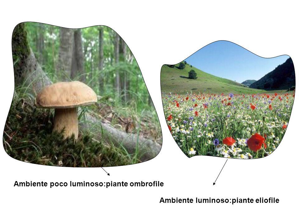 Ambiente poco luminoso:piante ombrofile