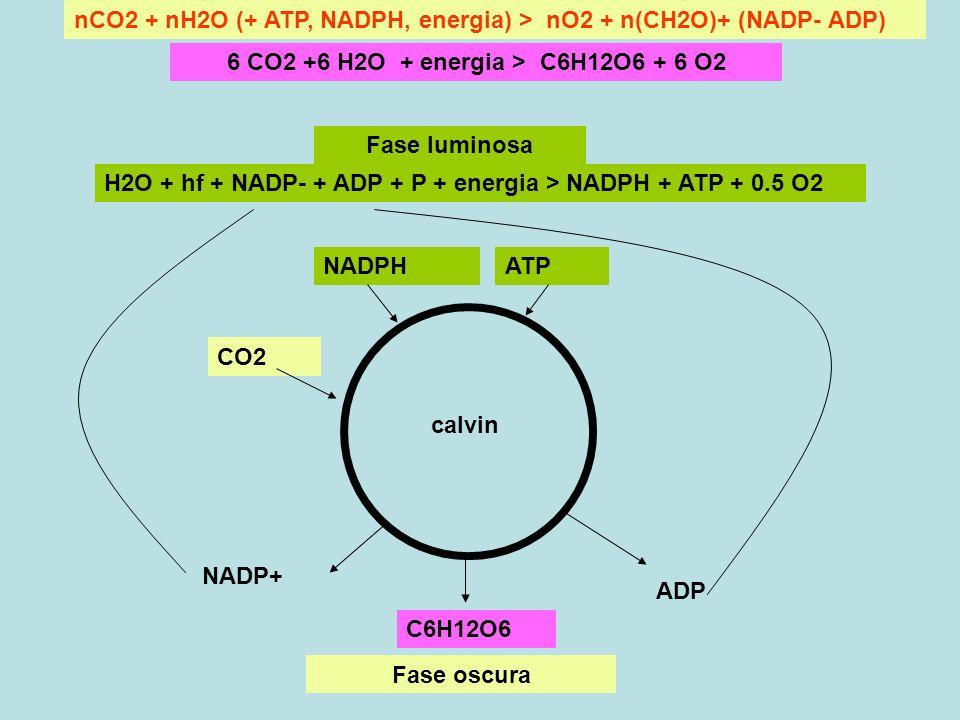 6 CO2 +6 H2O + energia > C6H12O6 + 6 O2