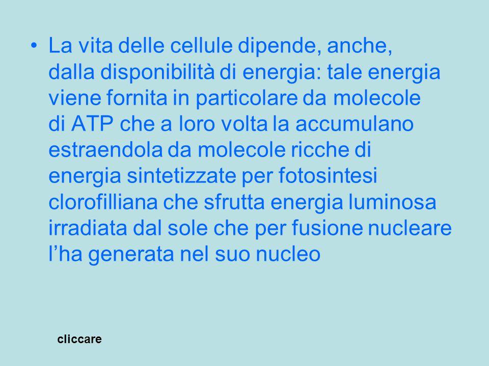 La vita delle cellule dipende, anche, dalla disponibilità di energia: tale energia viene fornita in particolare da molecole di ATP che a loro volta la accumulano estraendola da molecole ricche di energia sintetizzate per fotosintesi clorofilliana che sfrutta energia luminosa irradiata dal sole che per fusione nucleare l'ha generata nel suo nucleo
