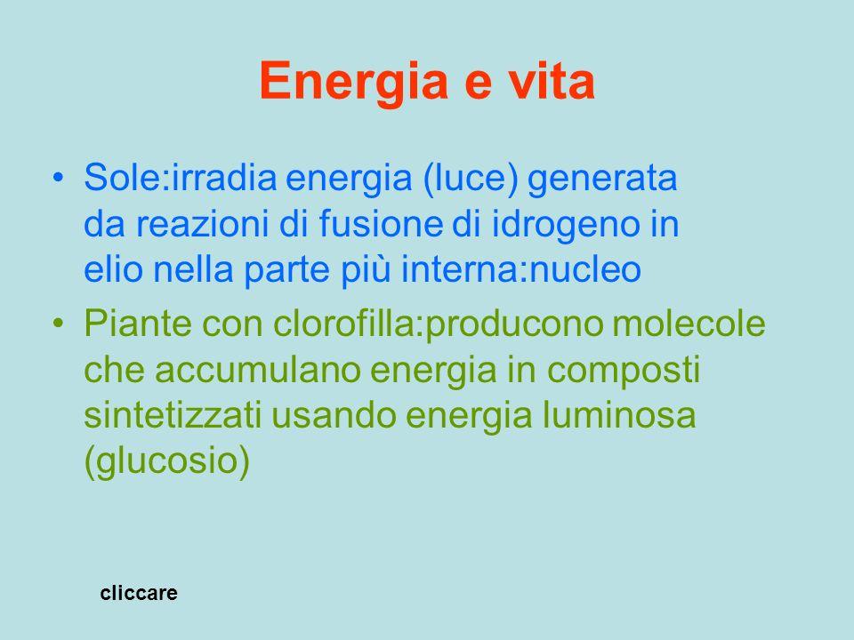Energia e vita Sole:irradia energia (luce) generata da reazioni di fusione di idrogeno in elio nella parte più interna:nucleo.