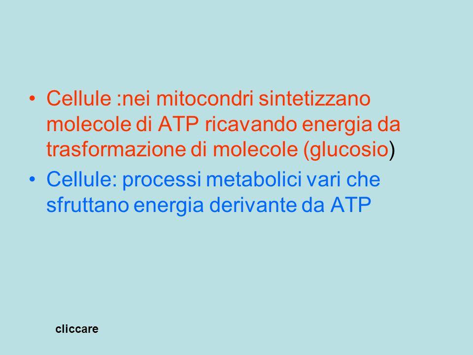 Cellule :nei mitocondri sintetizzano molecole di ATP ricavando energia da trasformazione di molecole (glucosio)