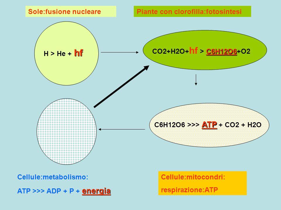 Sole:fusione nucleare