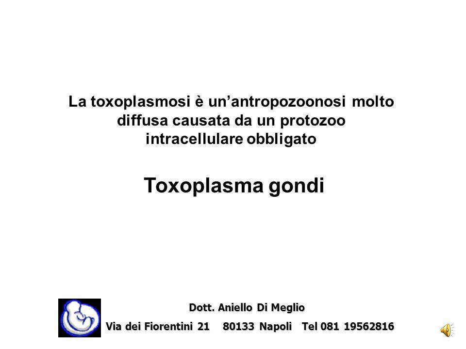 La toxoplasmosi è un'antropozoonosi molto diffusa causata da un protozoo intracellulare obbligato