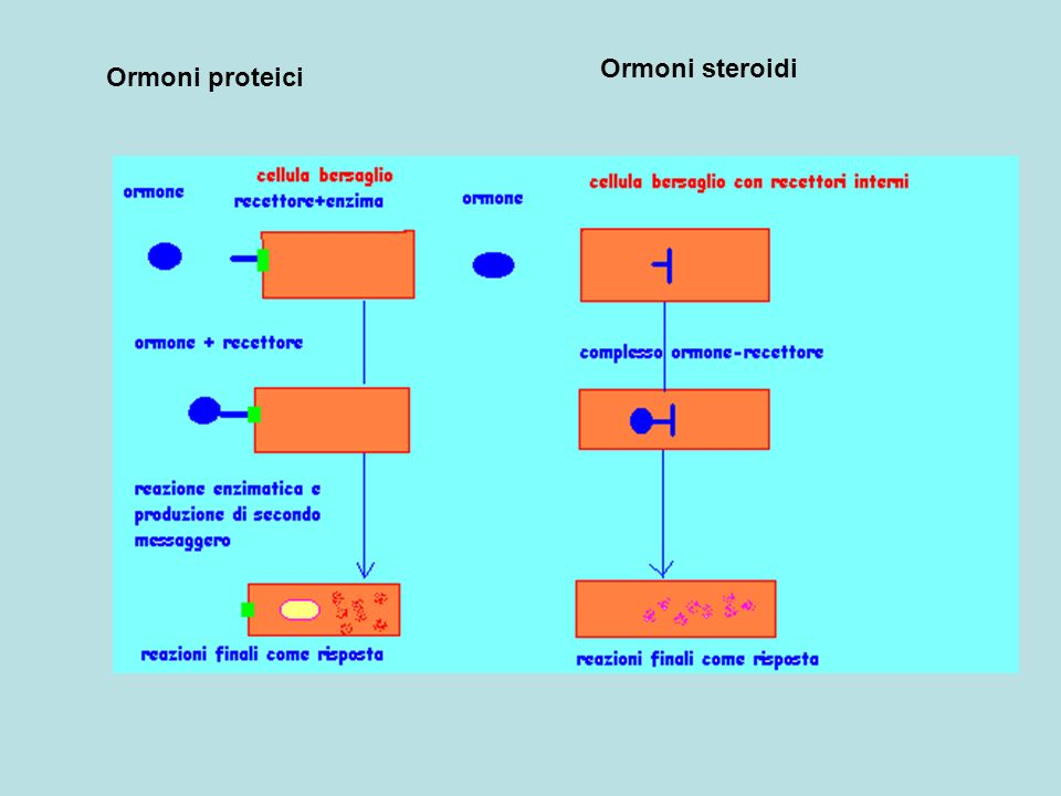 Ormoni steroidi Ormoni proteici