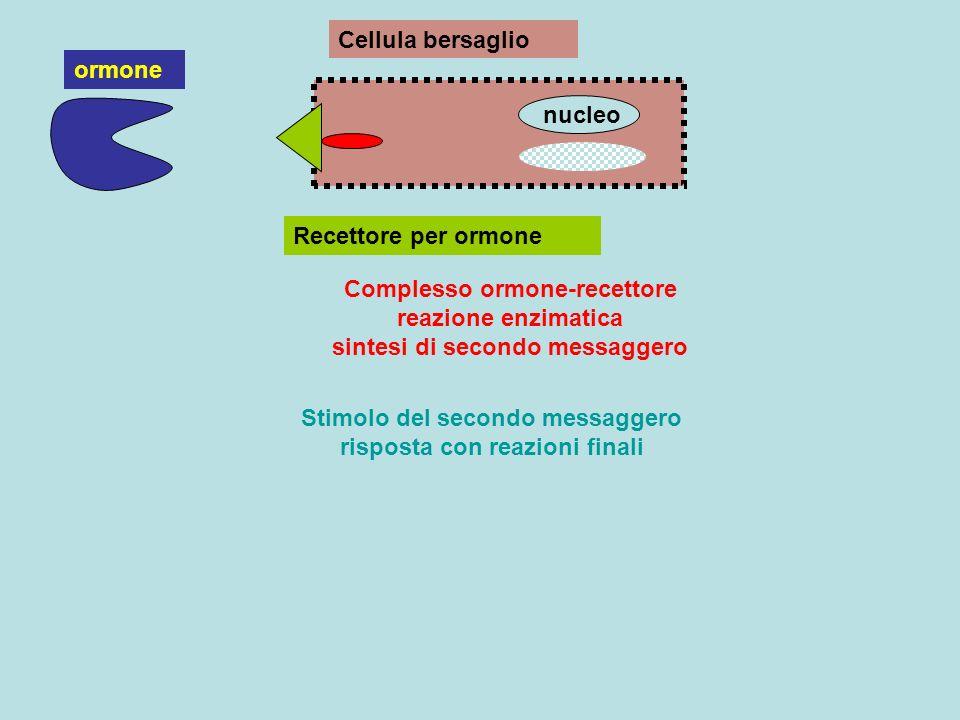 Stimolo del secondo messaggero risposta con reazioni finali