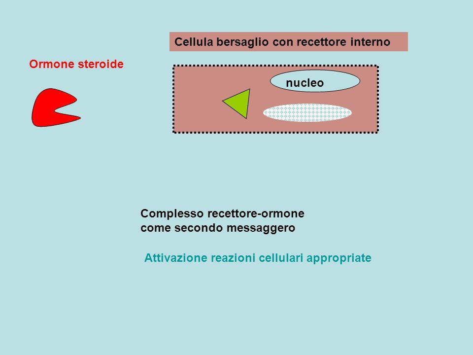 Cellula bersaglio con recettore interno