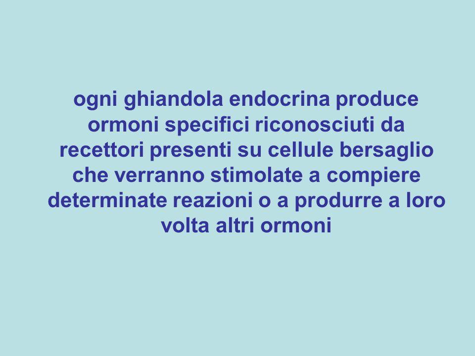 ogni ghiandola endocrina produce ormoni specifici riconosciuti da recettori presenti su cellule bersaglio che verranno stimolate a compiere determinate reazioni o a produrre a loro volta altri ormoni