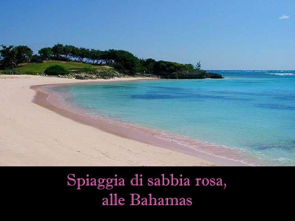Spiaggia di sabbia rosa,