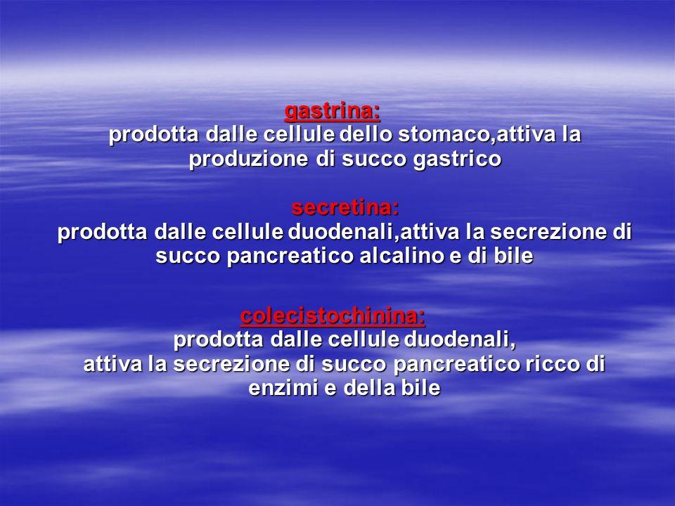 gastrina: prodotta dalle cellule dello stomaco,attiva la produzione di succo gastrico secretina: prodotta dalle cellule duodenali,attiva la secrezione di succo pancreatico alcalino e di bile
