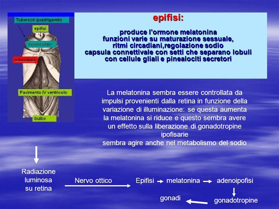 Radiazione luminosa su retina